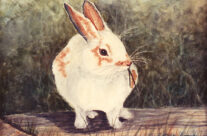 Bunny Sitting on a Railroad Tie