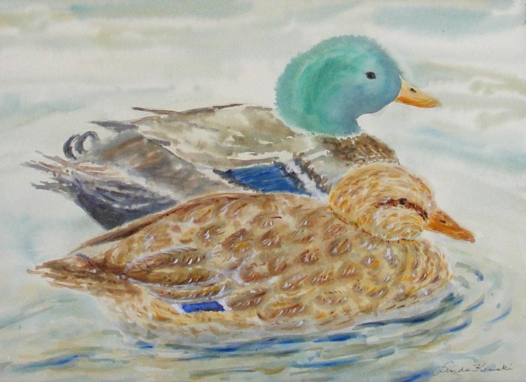 Ducks 0439