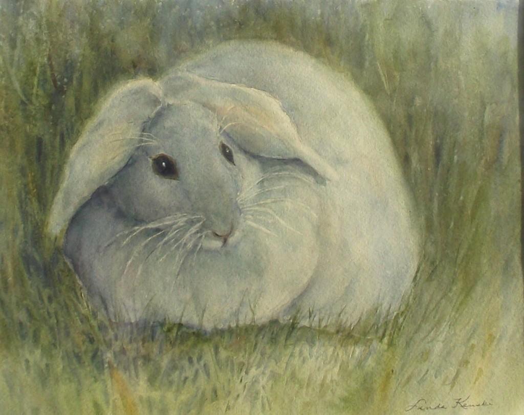 Silly bunny 0311