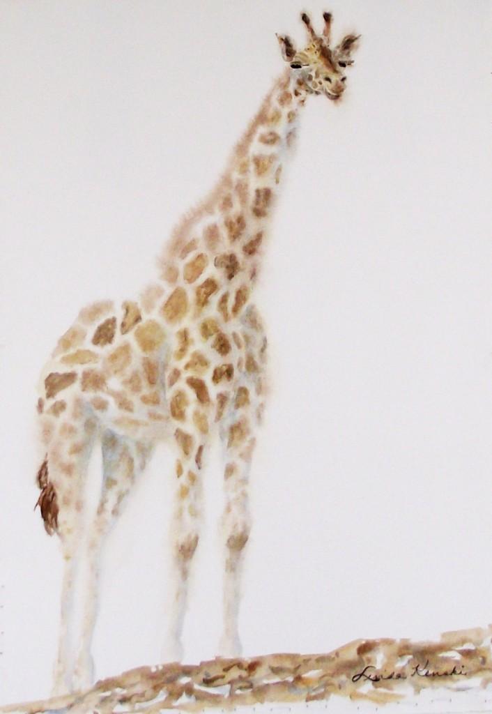 Giraffe 0444