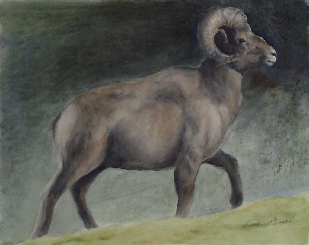 Ram 0443